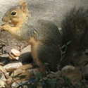 squirrel thumbnail